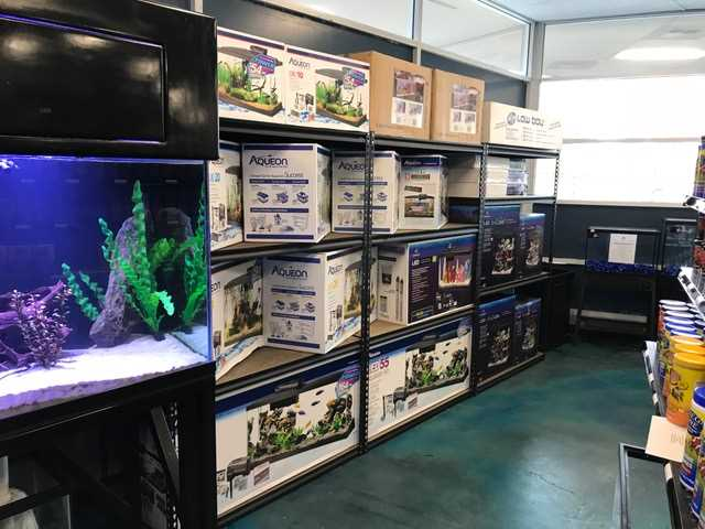 Home Aquarium – Great Benefits Of Keeping Fish As Pets